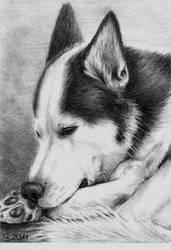 sleeping husky by Vitadog