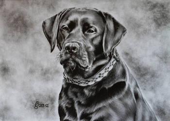 Labrador by Vitadog
