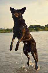 jumper by Vitadog