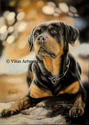 Rottweiler by Vitadog