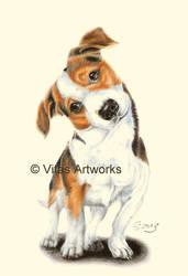 Barney, Jack Russell by Vitadog