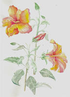 watercolor tulipa by JettieHier