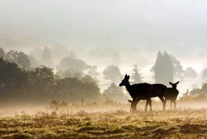 Deers in Richmond Park, London by gregbajor
