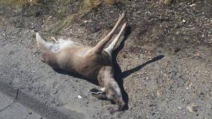 deer 1 by calvincanibus