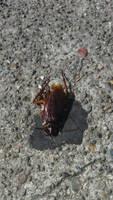 cockroach 1 by calvincanibus