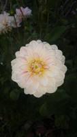 eastbay beauty (flower) by calvincanibus
