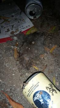 rodent 1 by calvincanibus