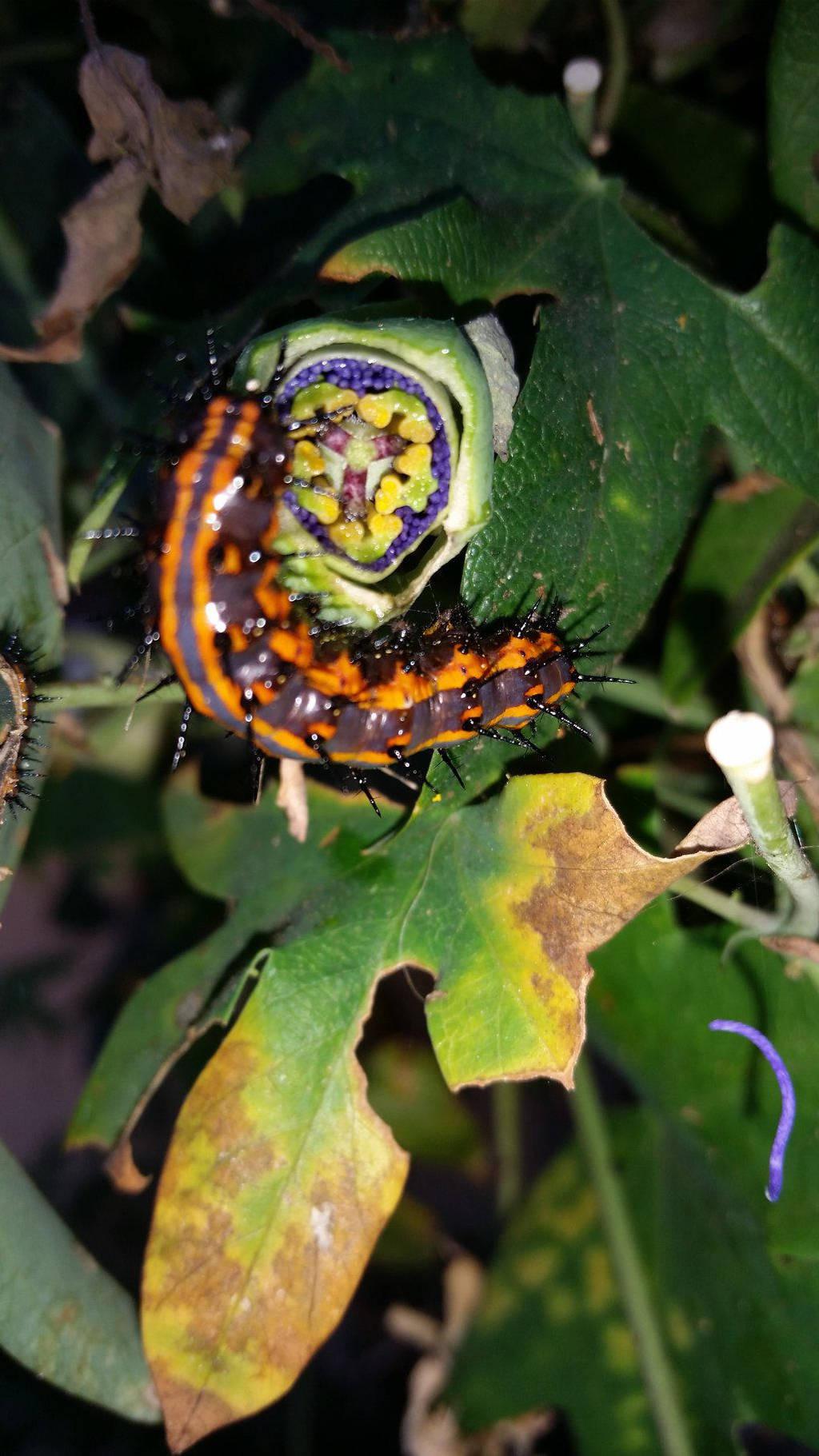 caterpillar botanical disection 1 by calvincanibus