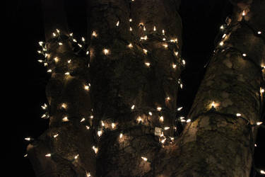 Tree bark in the winter by Akumeoi