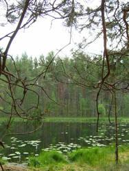 Forest lake by Regen-Lena