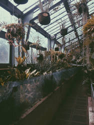 Botanic garden by JwCorrea