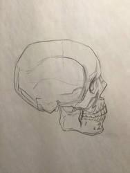 Skull Study Profile by MillionPM