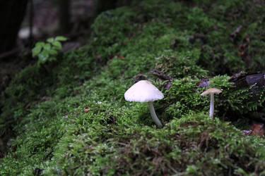 Kingdom Fungi by SmartDen