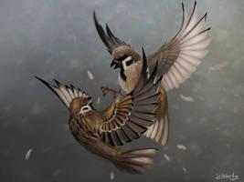 House sparrow by SvPolarFox