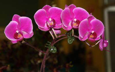 Orchid.14_Mind-Matter by Mind-Matter