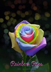 Rainbow Rose by peex