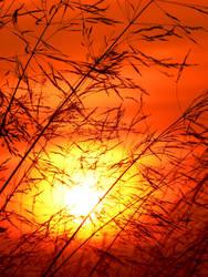 Orange Sky by saphirestaub