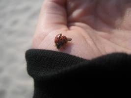 ladybug. by ohwhataradsheep