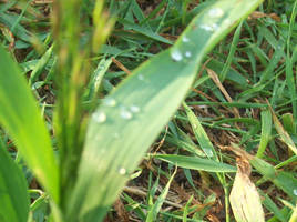 the wet grass by blackwolfgal2
