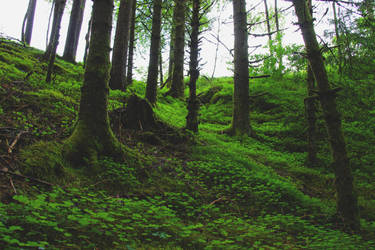 Green Magical Forest =) by wellowr