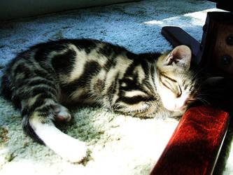 Sleepy Kitten by turtlepoppet
