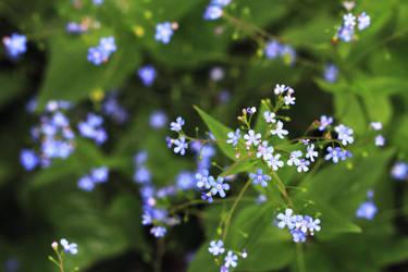 Little Purple Flowers by KaleyObsidia