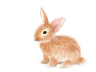 rabbit by KaleyObsidia