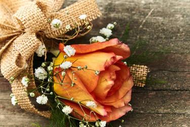 IMG 5103 orange-rose by KaleyObsidia
