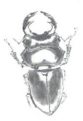 Big Bug 4 by vipmib