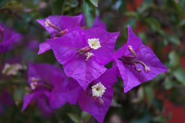 Flowers Stock Photo DSC03213 FREE by miofika