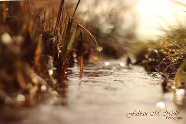 Little stream by Optionator