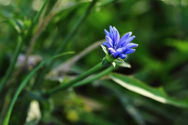 Blaue Blume by Optionator