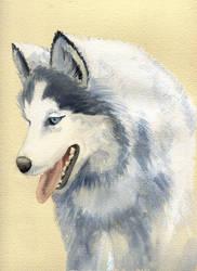 One more dog by asiapasek