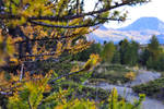Autumn by SnowPinappleYeah