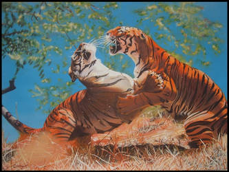 Tigers by Canny77
