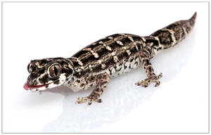 Viper gecko by CamStatic