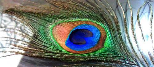 Peacock feather by XaraaKay