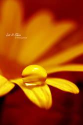 Let It Shine by ninazdesign