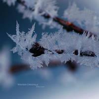 Winter Crystals by ninazdesign