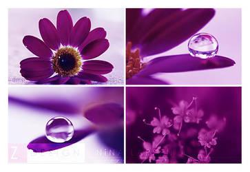 Purple by ninazdesign