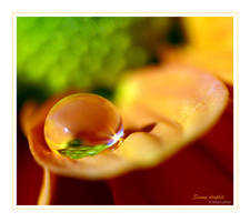 Sunny Droplet by ninazdesign