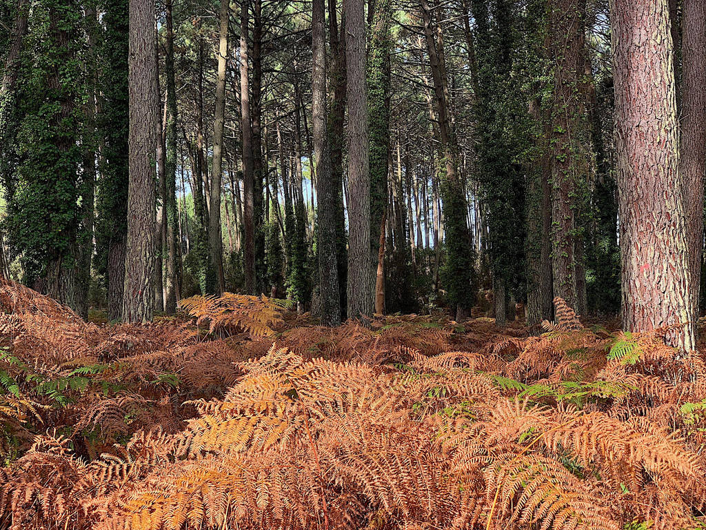 Autumn by Jane-Eyre13