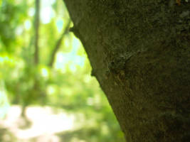 Young tree bark by LeetZero