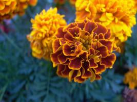 Orange flower 1 by LeetZero