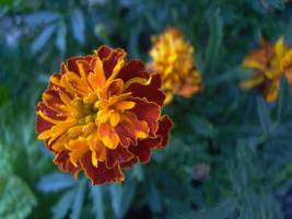 Orange flower 2 by LeetZero