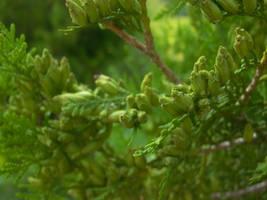 Plant by LeetZero