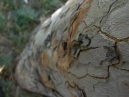 Tree bark 2 by LeetZero