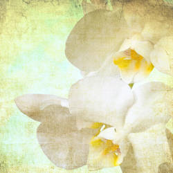 Vintage orchid flowers by yko-54