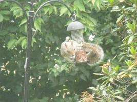 Bird feeder by Jamdeski