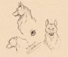 Etude du loup 1 by Xx-tatooz-xX